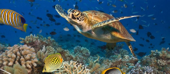 australia-hero-08-great-barrier-reef-998x437